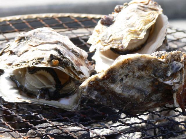 [キニナルッ]今年も「牡蠣の食べ放題」を開始!新鮮な旬の味覚を味わおう