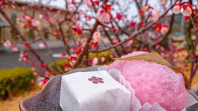 [キニナルッ]山田屋フォトコンテスト作品募集賞金商品総額は約50万円!