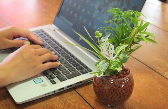 [キニナルッ]愛媛大農学部の研究成果を引用快適さを追求した観葉植物の寄せ植え