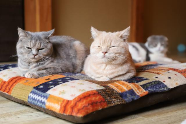 [OPEN]短期宿泊から長期利用までOK!猫専用のペットホテル[レジャー・観光・ホテル・旅行]