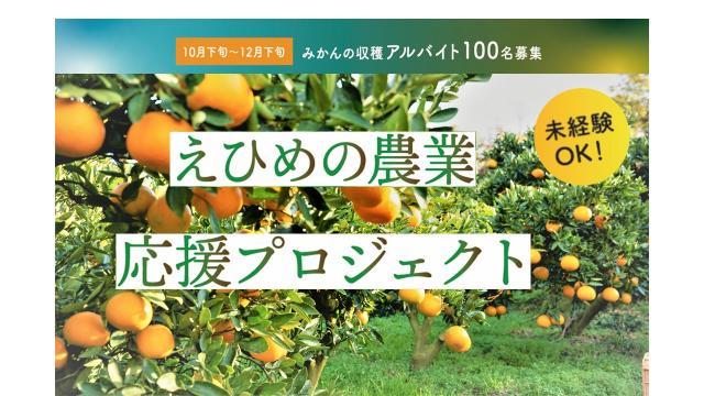 [キニナルッ]みんなの力で柑橘農家を応援しようアルバイト100名大募集!
