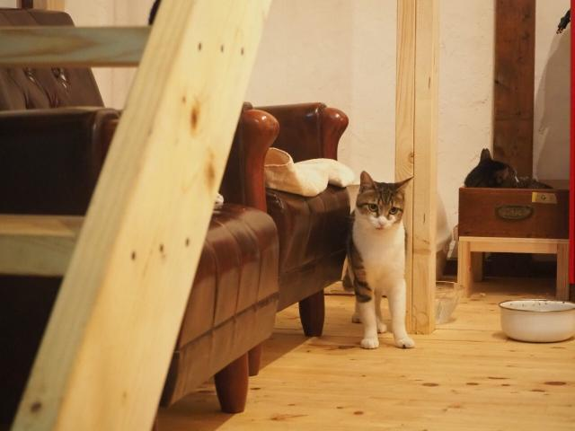 [OPEN]家族を探している保護猫と猫を愛する人をつなぐカフェ[グルメ]